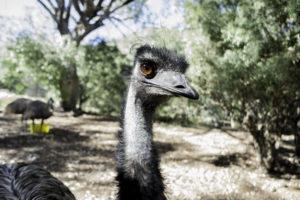 tamworth-australia