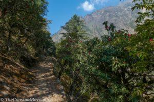 Tsum Valley trail