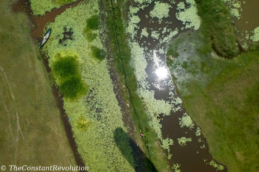 View of the marsh from above