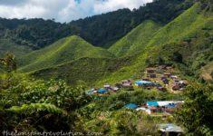 Cameron Highlands' Jungle Trails