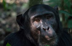 Uganda: Chimps, Treks and Parties in Fort Portal