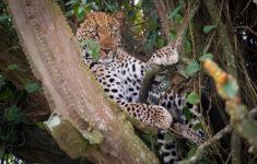 Uganda: Murchinson Falls Vs Queen Elisabeth National Parks