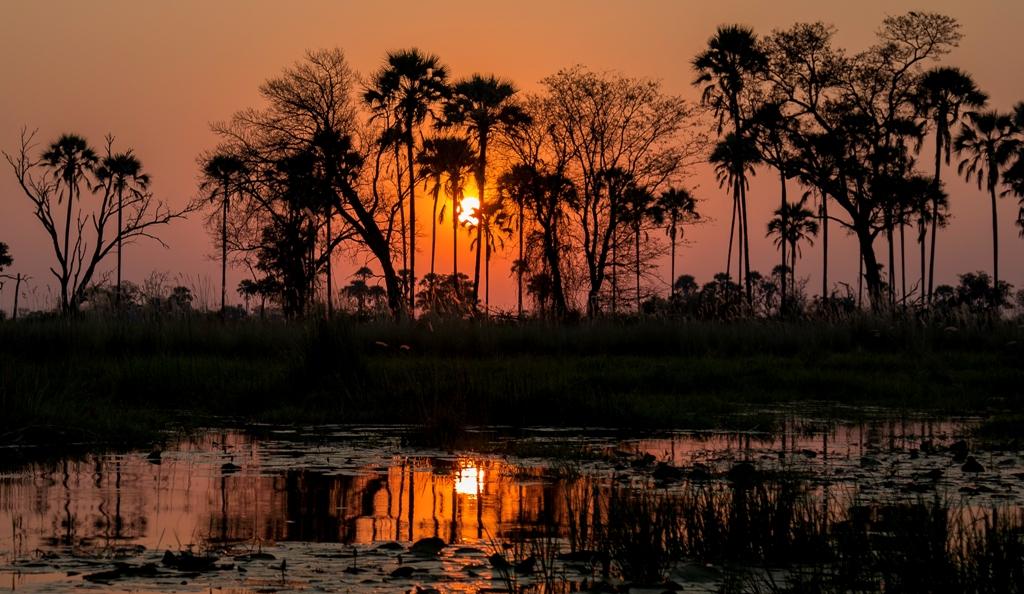 Sunset - Okavango Delta