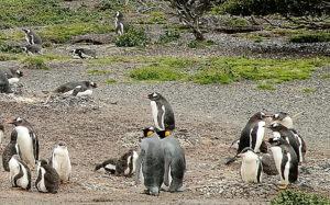 penguin-island-tierra-del-fuego