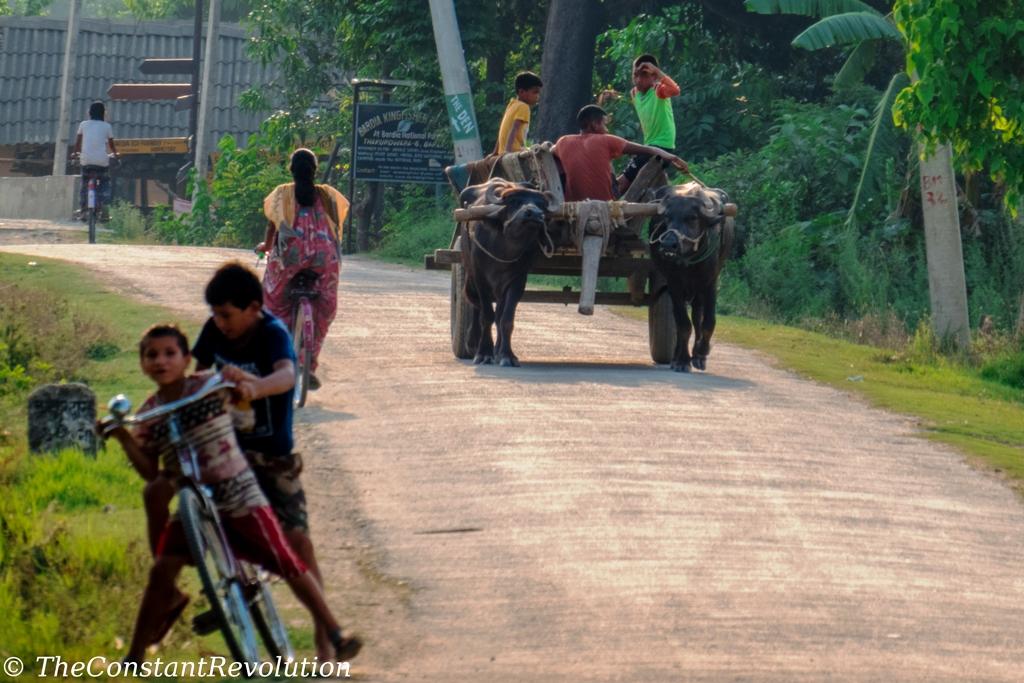Tharu People: a Rural Way of Life?