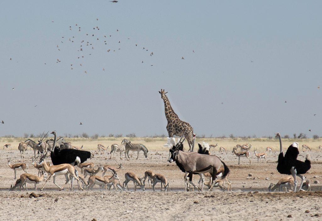 Waterhole - Etosha National Park