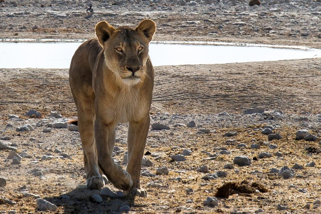 Etosha and Namibia Wildlife