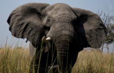 Kingdom of Elephants – Botswana
