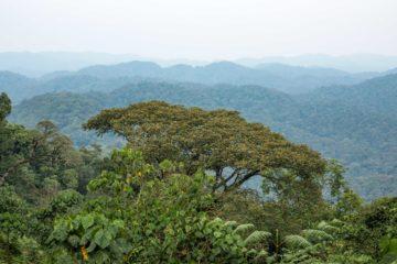 Uganda: Kabale for Bwindi and Lake Bunyonyi